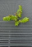 Miastowa roślina Obraz Stock