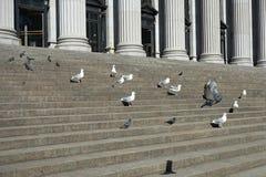 Miastowi ptaki Obrazy Royalty Free