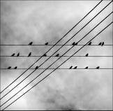 Miastowi ptaki na elektrycznych drutach Fotografia Royalty Free