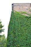 Miastowy dom z Zielonymi ścianami zdjęcie stock