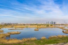 Miastowy ekosystem zdjęcie stock