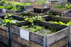 Miastowy ogród i Uprawiać ziemię w spingtime obraz stock