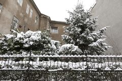 Miastowy ogród w zima czasie Zdjęcia Stock