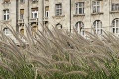 Miastowy ogrodnictwo obrazy royalty free