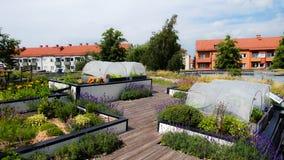 Miastowy ogrodnictwo dach w Sweden fotografia royalty free