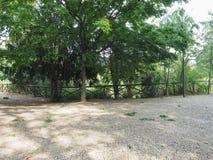 miastowy park z drzewami obraz stock