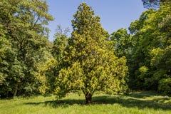 Miastowy parkowy drzewo obrazy royalty free