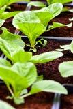 Miastowy rolnictwo, miastowy uprawiać ziemię lub miastowy ogrodnictwo, zdjęcia stock