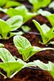 Miastowy rolnictwo, miastowy uprawiać ziemię lub miastowy ogrodnictwo, zdjęcia royalty free