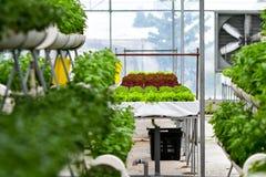 Miastowy rolnictwo, miastowy uprawiać ziemię lub miastowy ogrodnictwo, obrazy stock