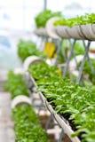 Miastowy rolnictwo, miastowy uprawiać ziemię lub miastowy ogrodnictwo, fotografia stock