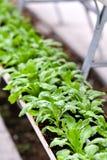 Miastowy rolnictwo, miastowy uprawiać ziemię lub miastowy ogrodnictwo, zdjęcie royalty free