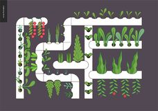 Miastowy uprawiać ziemię i uprawiać ogródek - hydroponika ilustracja wektor