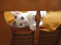 Miau lizenzfreies stockfoto