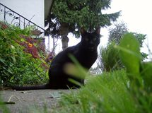 Miauen der schwarzen Katze Lizenzfreies Stockbild