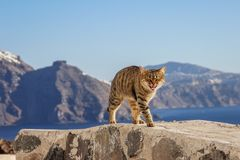 Miauen einer der getigerten Katze Katze Santorini Griechenland stockfoto