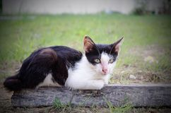 Miaw... how are you today. A cat sitting at wood everning Stock Photos