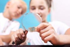 mica Två barn, en flicka och en pojke som håller ögonen på till och med stenar för ett förstoringsglas från hans samling av, vagg Royaltyfria Bilder
