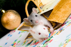 Mice. Image of two mice looking at camera in gift package Royalty Free Stock Photos