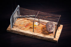 Mice caught in the mousetrap Royalty Free Stock Image