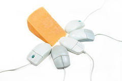 Mice and cheese. A group of computer mice around some cheese Royalty Free Stock Photography