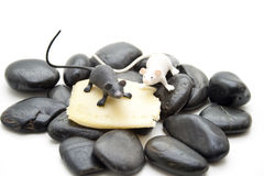 Mice with cheese Stock Photos