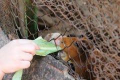 child feeding rabbit Royalty Free Stock Photo