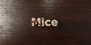 Mice - grungy wooden headline on Maple  - 3D rendered royalty free stock image. This image can be used for an online website banner ad or a print postcard Stock Photos