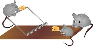 The mice while playing say..More cheese please!. 3 mice playing around mouse trap to get cheese to eat Royalty Free Stock Photo