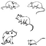 Mice. A sketch by hand. Pencil drawing Royalty Free Stock Image