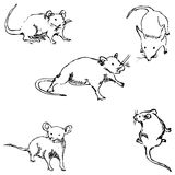 Mice. A sketch by hand. Pencil drawing Stock Photos