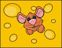 Mice snout peeking out of a piece of cheese Stock Images