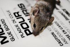 Mice Stock Photos