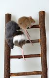 Mice on toy staircase. Three mice climbing a a wooden toy staircese royalty free stock photo