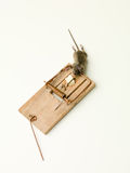 Mice in a trap Stock Photography