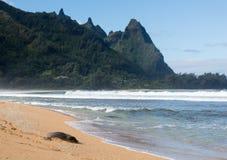 Michaelita foka na tunelach plażowy Kauai obrazy royalty free