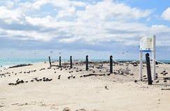 Michaelmas岩礁用美丽的美好的白色沙子&土耳其玉色水显示这里与许多海鸟、障碍和标签签字 免版税库存图片