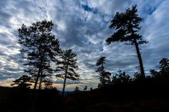 Michaux状态森林山树在Fa的宾夕法尼亚 免版税库存照片