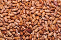Michigan beans Royalty Free Stock Image