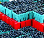 Michigan blueberries Royalty Free Stock Photo