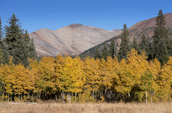 Michigan Creek Campground in Colorado with the changing of seasons. Royalty Free Stock Photos