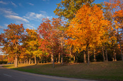 Michigan Fall Colors Royalty Free Stock Images
