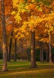 Michigan Fall Colors Royalty Free Stock Image