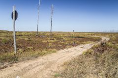 Michigan Forest Fire Aftermath Landscape. Michigan Forest Fire. Barren landscape slowly regrows after a devastating forest fire. The Two Hearted Fire decimated royalty free stock images