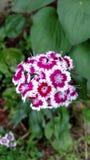 Michigan Garden Flora Royalty Free Stock Photography