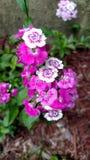 Michigan Garden Flora Stock Photo