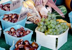 Fall foods: Michigan grapes and chestnuts Stock Photos