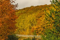 Michigan Highway M-22 in Autumn royalty free stock image