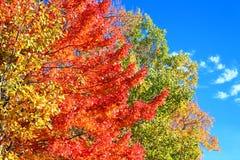 Michigan jesieni kolory zdjęcie royalty free
