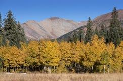 Michigan-Nebenfluss-Campingplatz in Colorado mit dem Ändern von Jahreszeiten Lizenzfreie Stockfotos